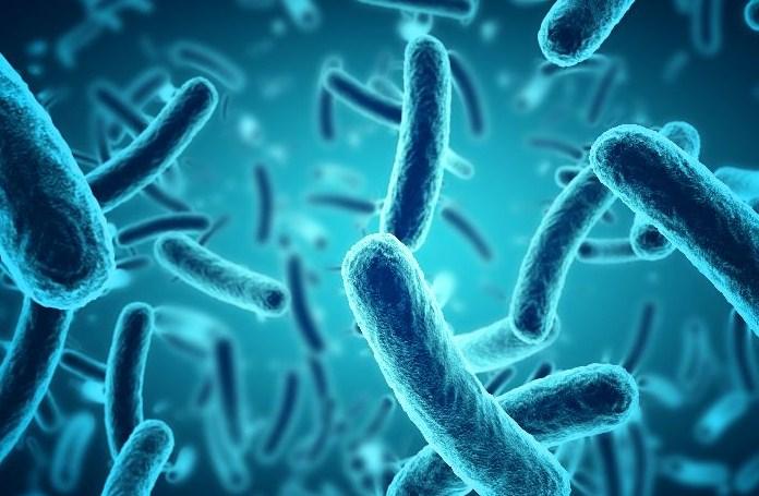 Seorang peneliti bidang mikrobiologi di sebuah lembaga penelitian sedang mengamati pertumbuhan 50 bakteri di laboratorium mikrobiologi