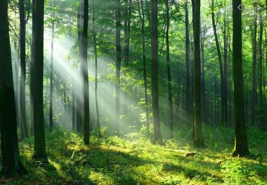 Ceritakan dengan singkat alasan keluarga Hassan Padersen menetap di hutan!