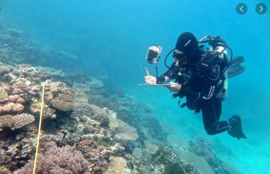 Jika terumbu karang di laut habis, apa yang akan terjadi? Kemukakan analisismu!