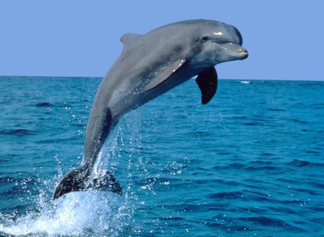 Seekor lumba-lumba menyelam ke dalam air sejauh 8 meter dari permukaan, kemudian lumba-lumba melompat setinggi 17 meter