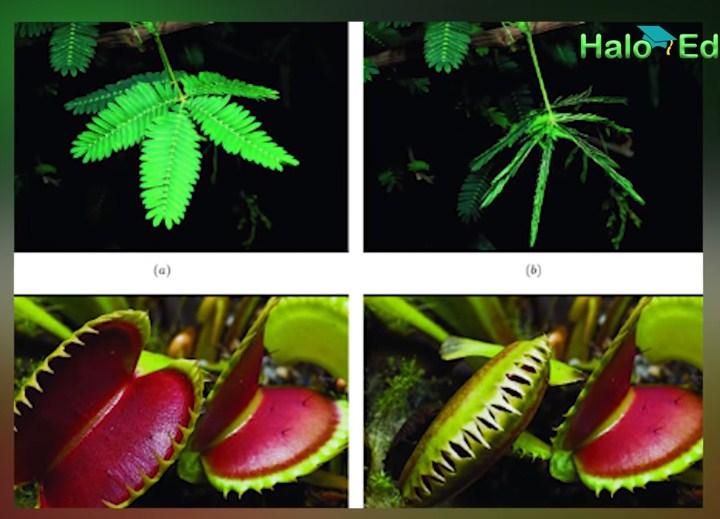 Apa saja bagian tumbuhan yang sesuai dengan iklim dan karakteristik geografis tempat tinggalnya?