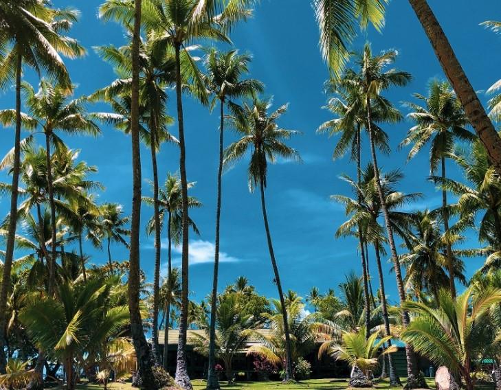 Jelaskan mengapa pohon kelapa dapat menjulang tinggi?