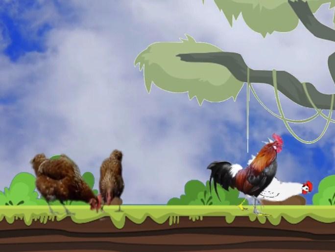 Bagaimanakah perkembangbiakan ayam?