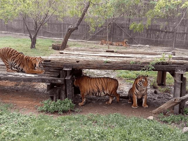 tripeat-thailand-safari-world