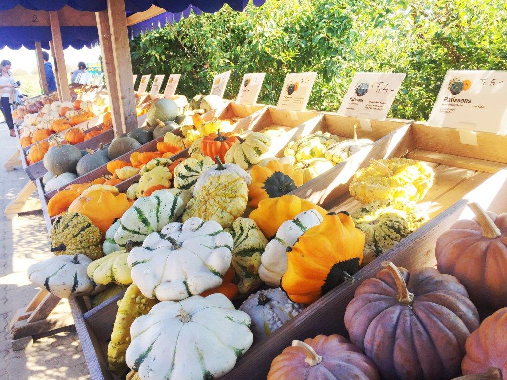 Pumpkin Festival Baselland Various Pumpkins