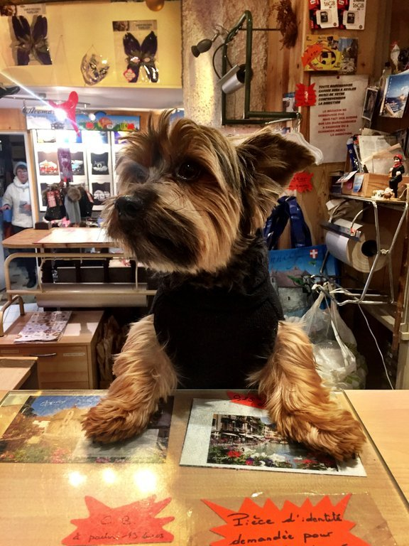 Dog poses as a shop owner