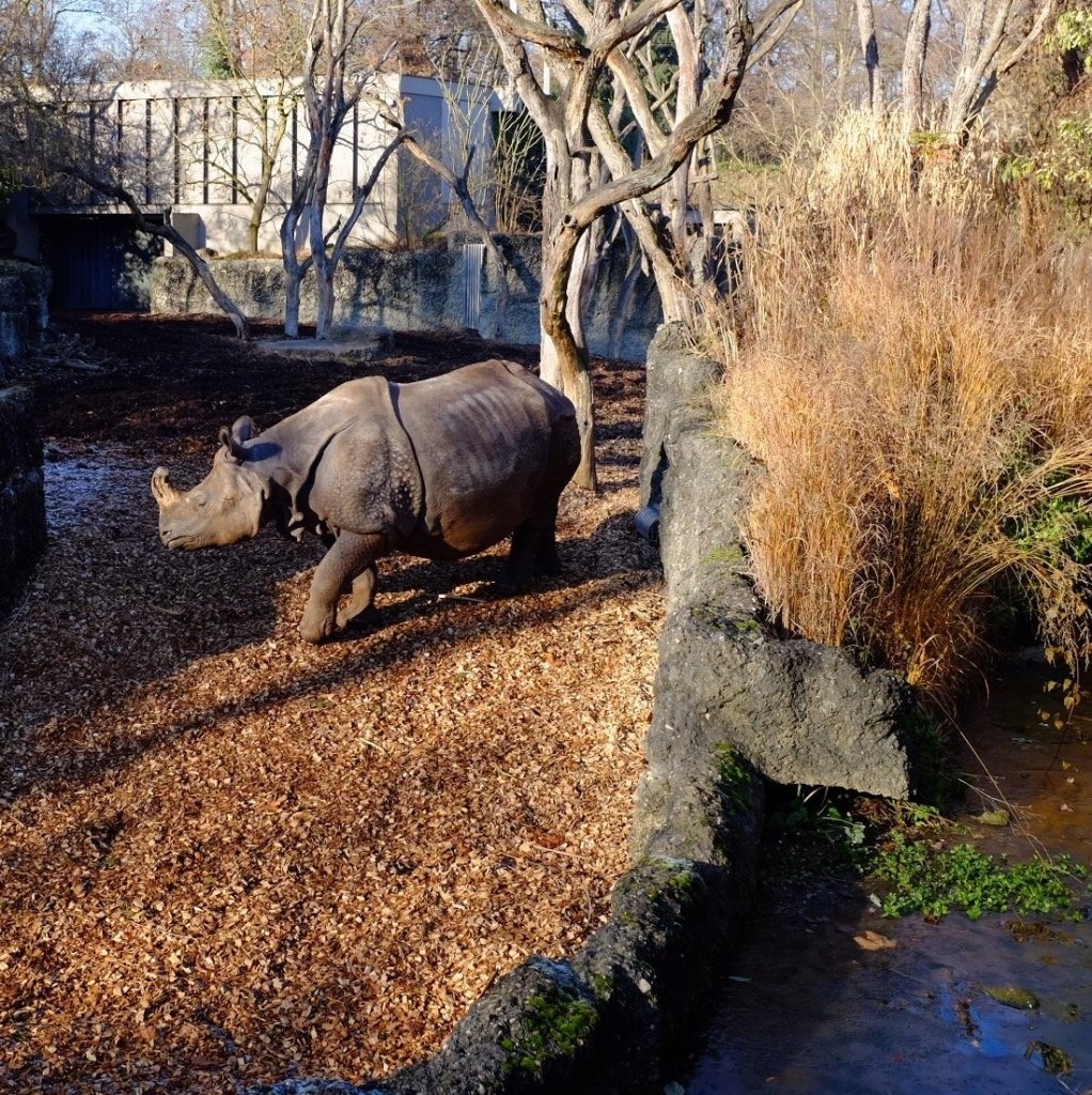 Things to do in Basel - Rhino at the Zoo in Basel