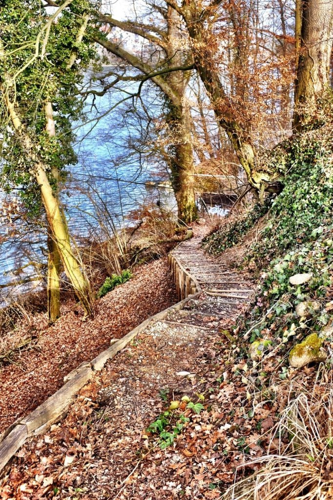 The path we took while hiking along the Rhein