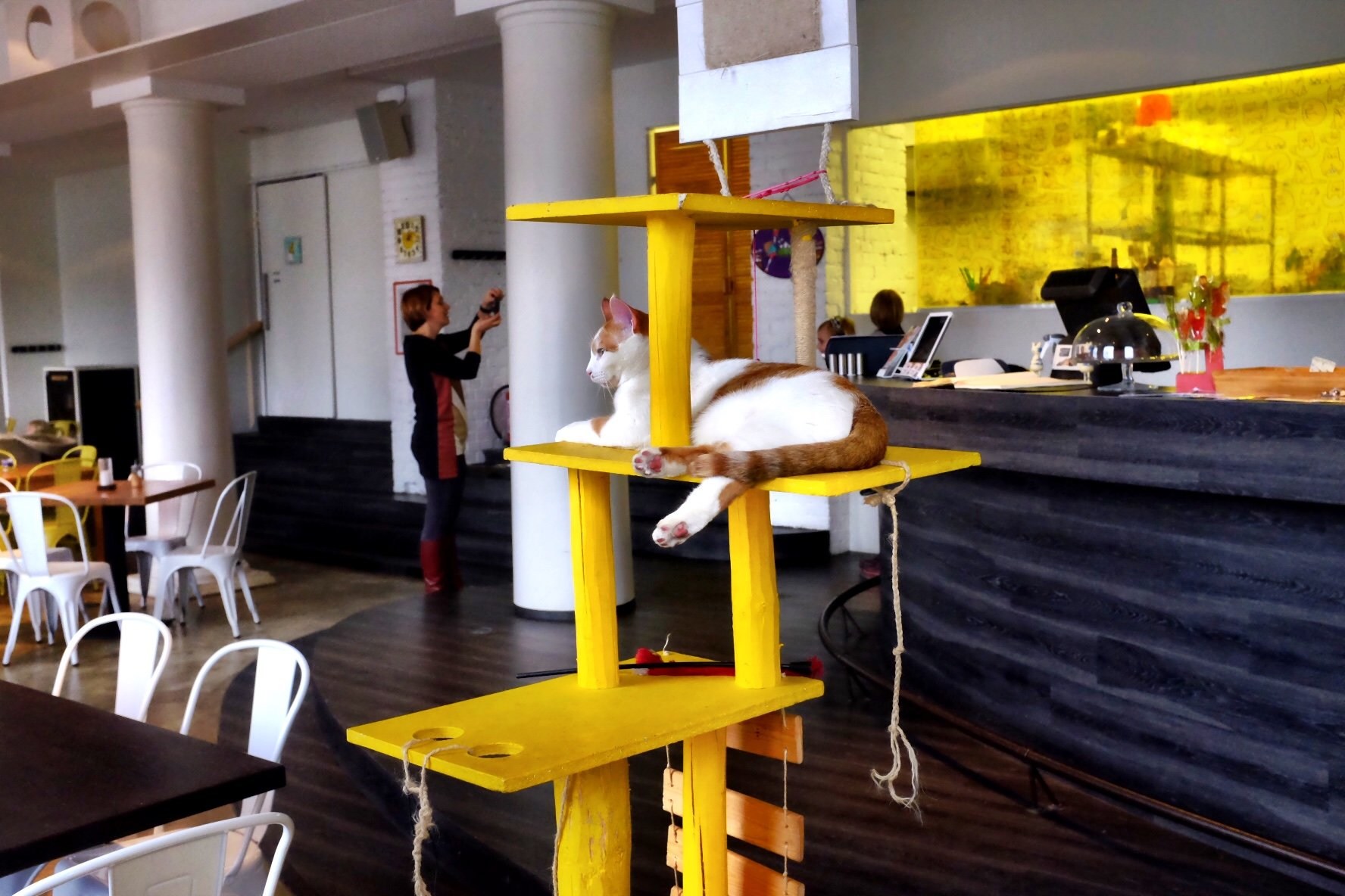 A ginger cat sits on a cat tree in a cat cafe in Tallinn