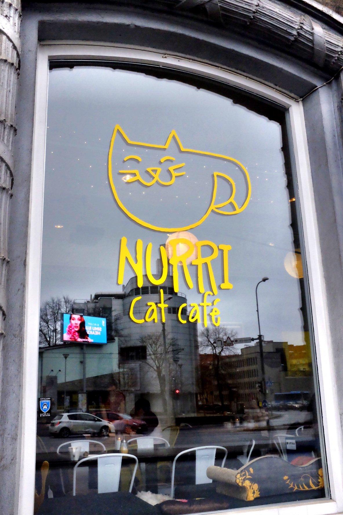 Nurri Cat Cafe in Tallinn
