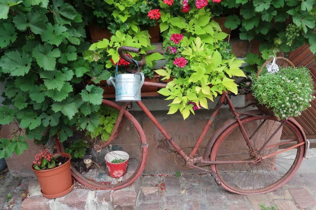 Alsace wine route