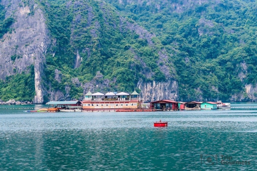 Halong bay cruise review oyster pearl farm
