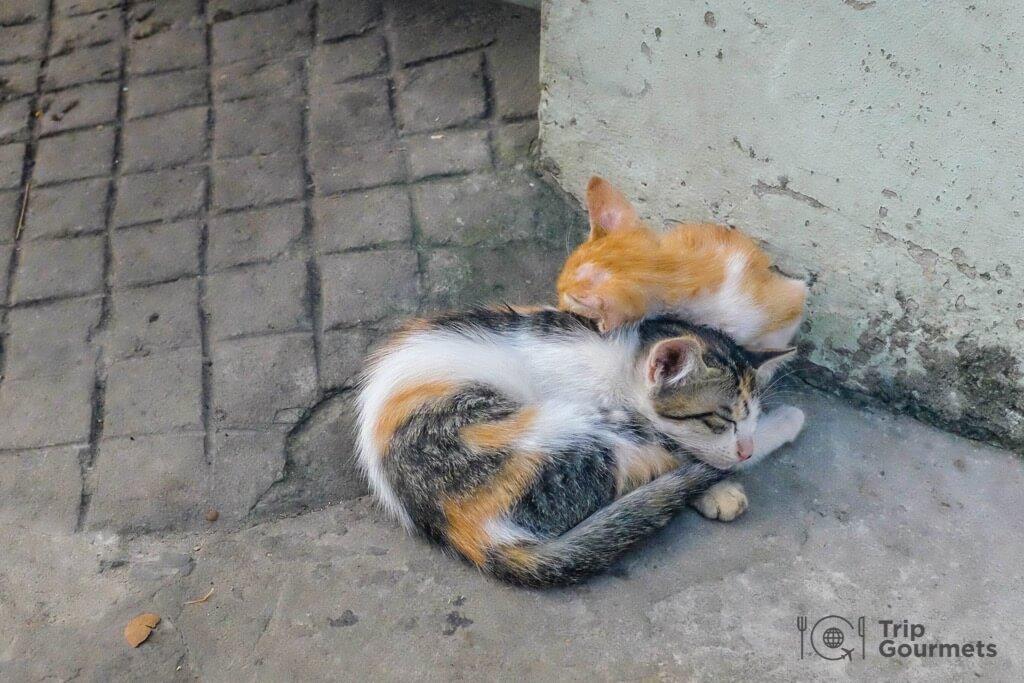 Hanoi Train Street sleeping kittens