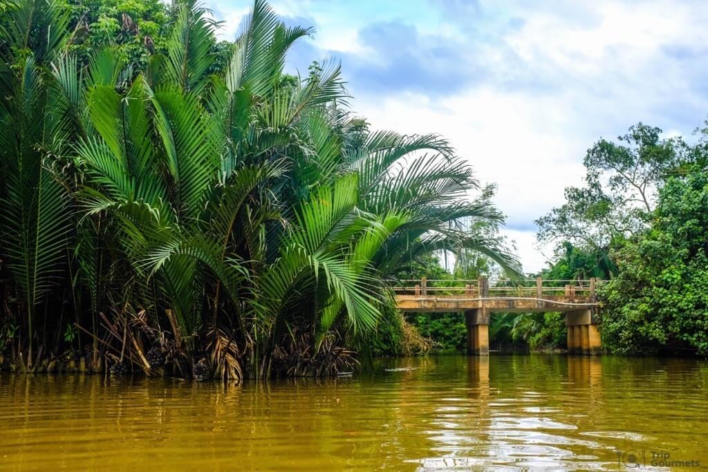Things to do in Kampot Green Cathedral bridge cambodia plants palms river