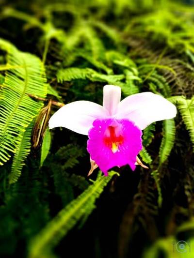 Things to do in Ipoh Orchid
