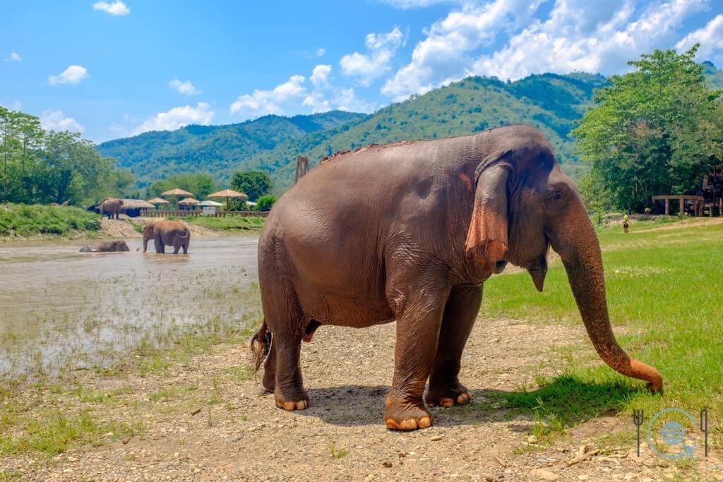 Chiang Mai Itinerary elephant nature park