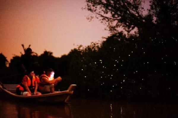 Kuala Lumpur Itinerary Fireflies Viator