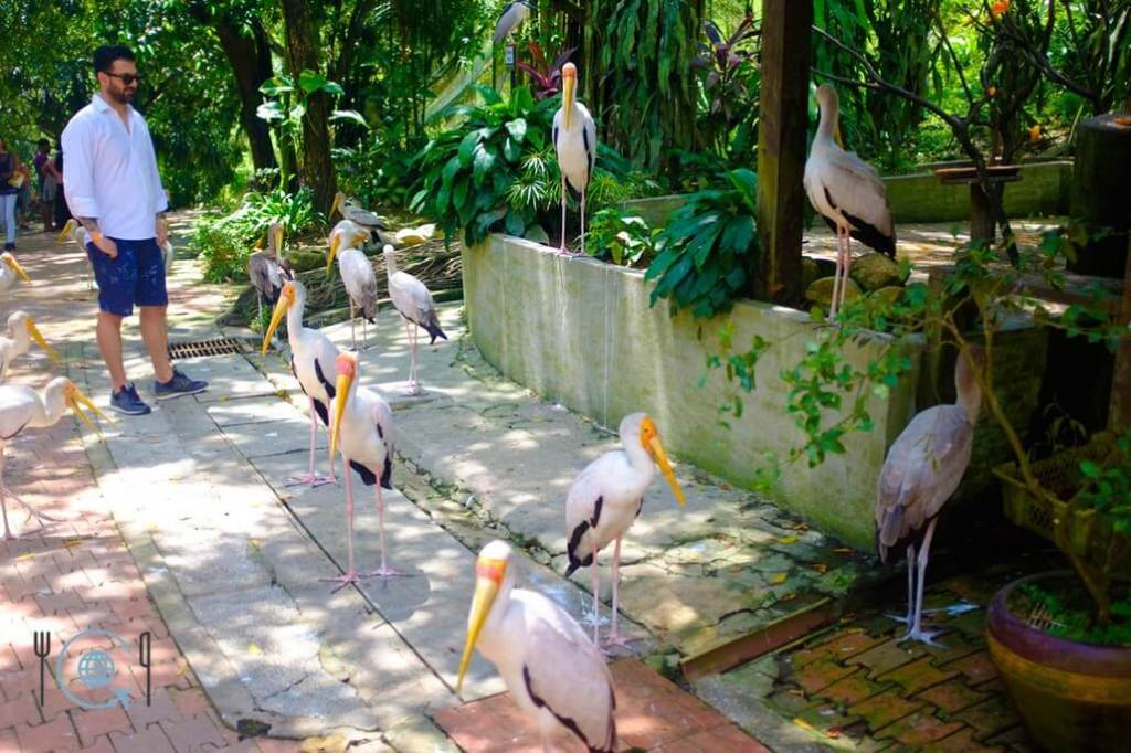 Kuala Lumpur Itinerary Storks