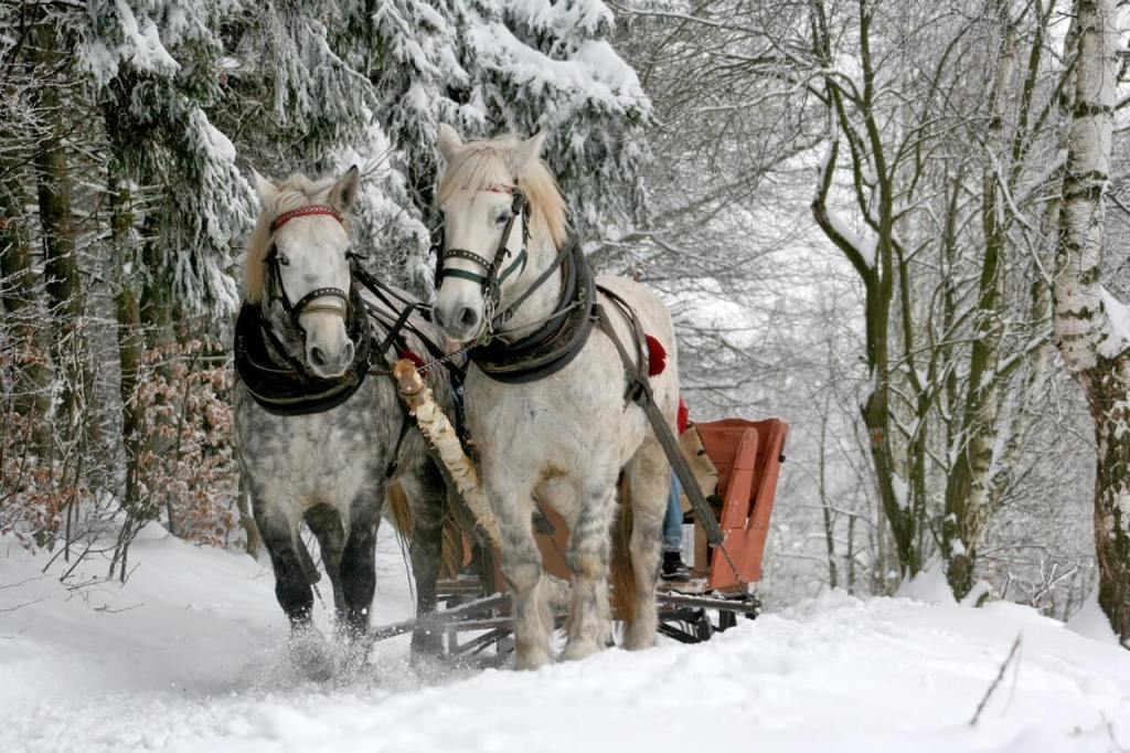 Things to do in Switzerland in winter - Horse-Drawn Sleigh - Photo from pexels
