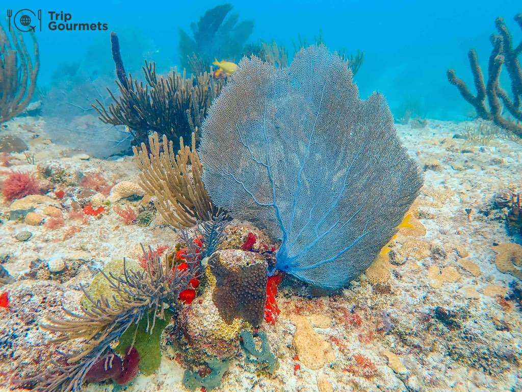 Best cameras for diving - Colourful Corals