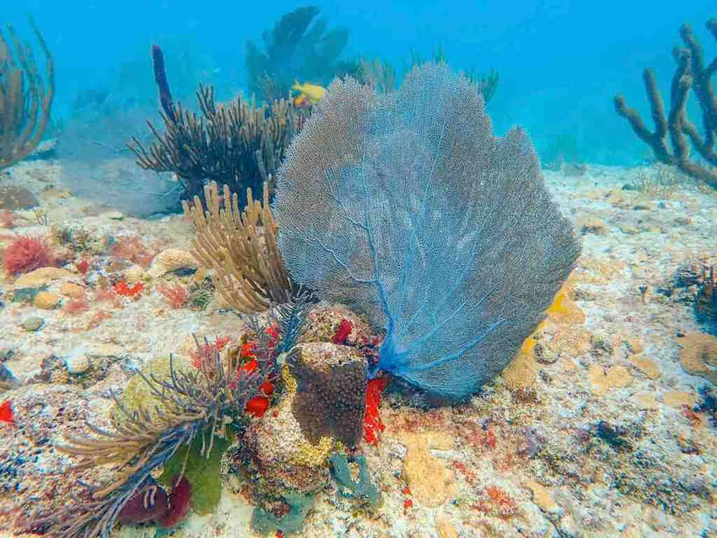 Scuba diving in Playa del Carmen - Corals