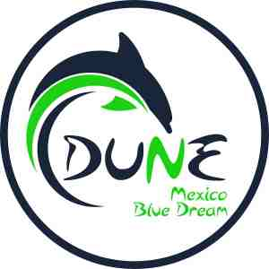 Scuba diving in Playa del Carmen - Dune Mexico Blue Dream