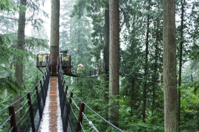Camino en los aires del bosque Capilano Mountain