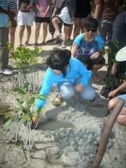 mangrove time09