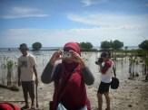 menanam mangrove04