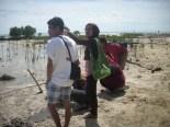 menanam mangrove11