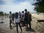 menanam mangrove13