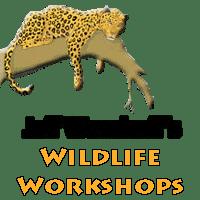 Jeff Wendorff - Wildlife Photography Workshop