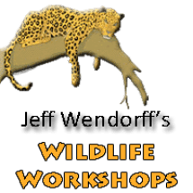 Jeff Wendorff - Wildlife Photography Workshop