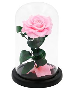 Glass Dome Pink