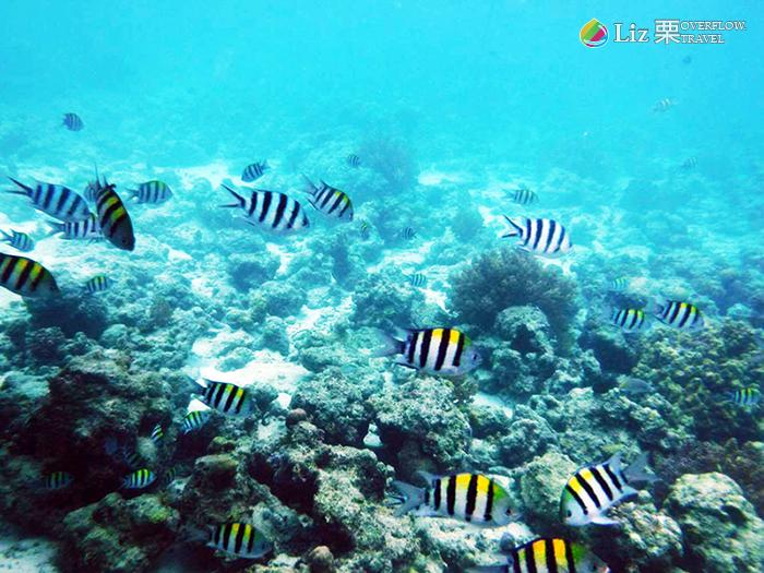 菲律賓海底,宿霧潛水,旅遊觀光,國外旅遊