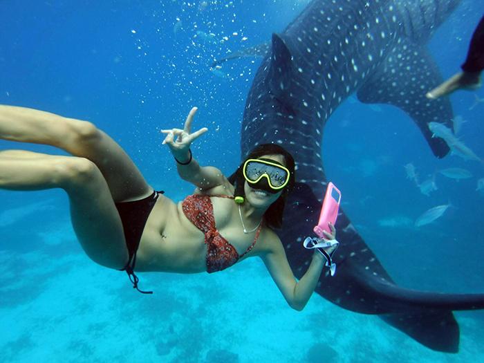 宿霧旅遊,奧斯洛,鯨鯊共舞