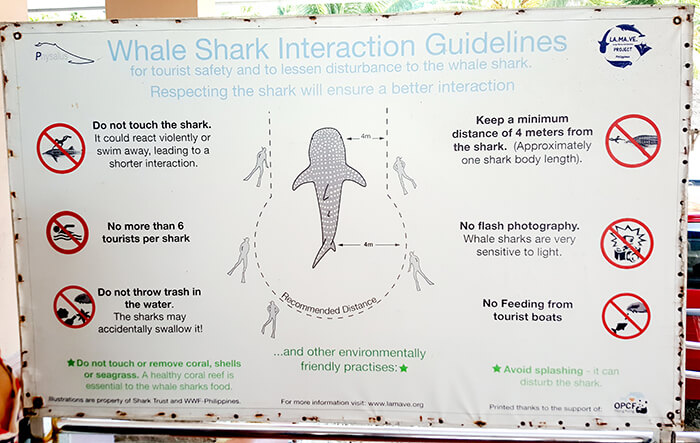 oslob鯨鯊-賞鯨規則