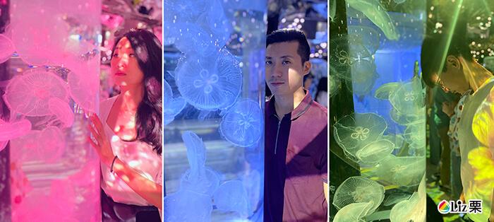 xpark水族館,水母,桃園青埔,都會型水生公園