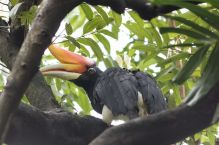 TripLovers_Malaysia_KL_034_KL-Bird-Park
