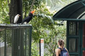 TripLovers_Malaysia_KL_041_KL-Bird-Park