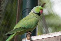 TripLovers_Malaysia_KL_055_KL-Bird-Park