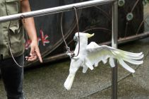 TripLovers_Malaysia_KL_078_KL-Bird-Park