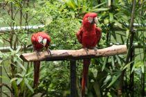 TripLovers_Malaysia_KL_091_KL-Bird-Park