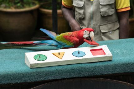 TripLovers_Malaysia_KL_094_KL-Bird-Park