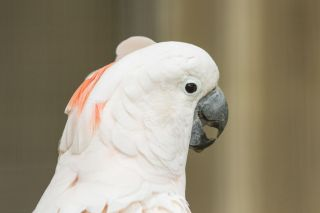 TripLovers_Malaysia_KL_100_KL-Bird-Park