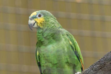 TripLovers_Malaysia_KL_105_KL-Bird-Park