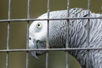 TripLovers_Malaysia_KL_136_KL-Bird-Park