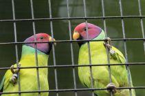 TripLovers_Malaysia_KL_138_KL-Bird-Park