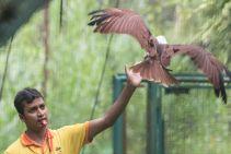 TripLovers_Malaysia_KL_153_KL-Bird-Park