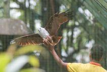 TripLovers_Malaysia_KL_154_KL-Bird-Park